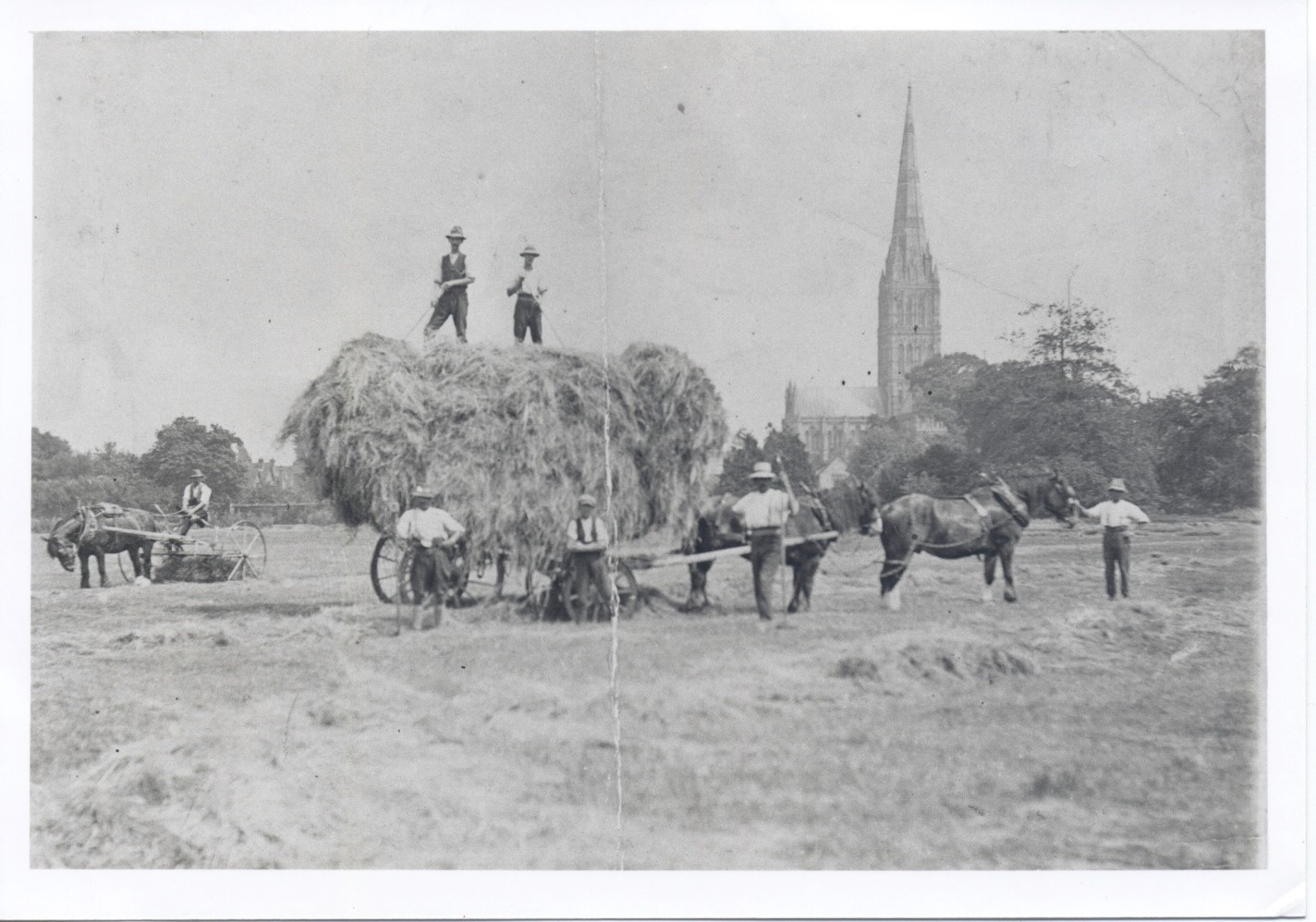 Salisbury Meadows